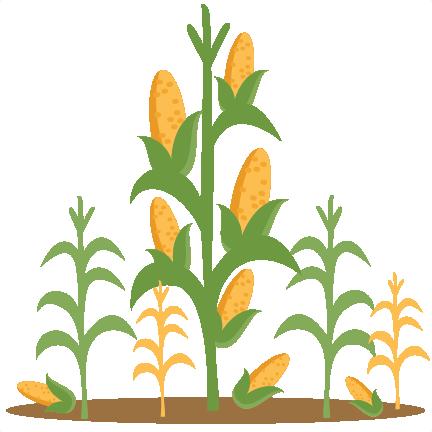 corn stalk clip art � cliparts