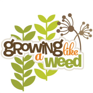 Growing Like A Weed SVG scrapbook title svg crapbook titles svg cut files svg files free svg files
